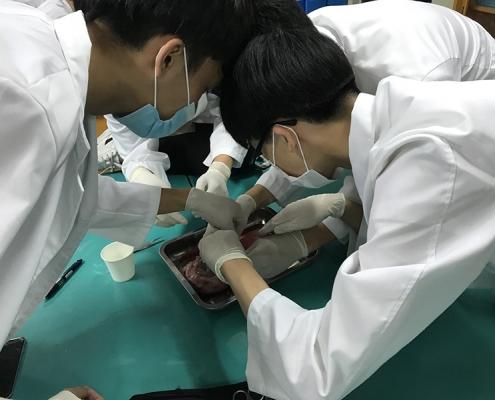 생명과학실험 돼지심장